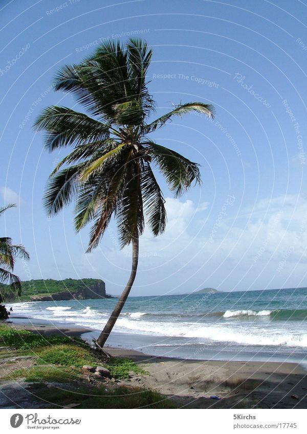 Die perfekte Palme Meer Strand Tobago Kleine Antillen Ferien & Urlaub & Reisen Wind