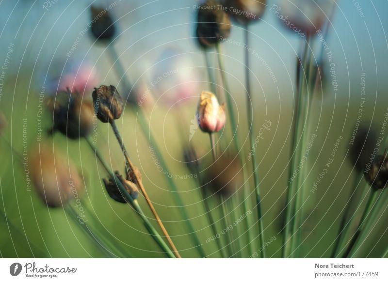 Kopf hoch I Natur schön Blume grün Pflanze Sommer Tier Leben Wiese Blüte Glück träumen Stimmung Feld rosa Zeit