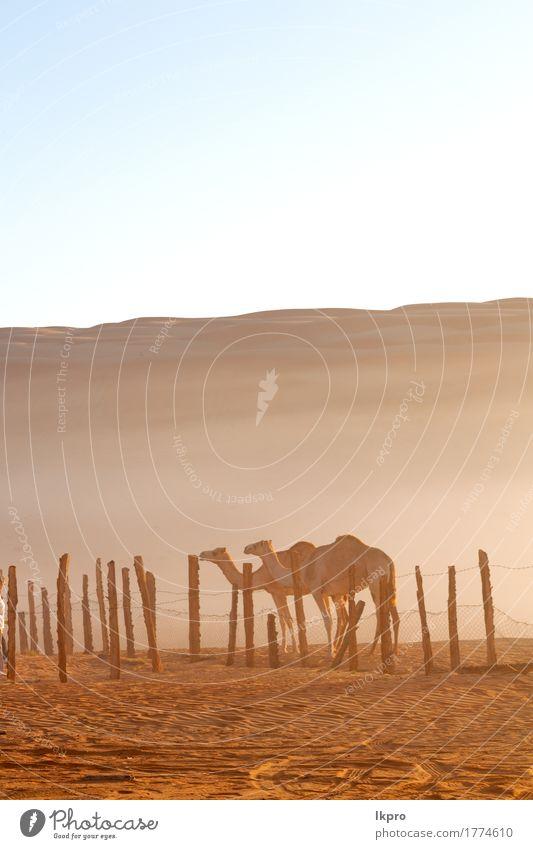 y Viertel der Wüste ein freies Gesicht Ferien & Urlaub & Reisen Tourismus Safari Natur Tier Sand Himmel Hügel heiß wild braun grau schwarz weiß Asien Arabien