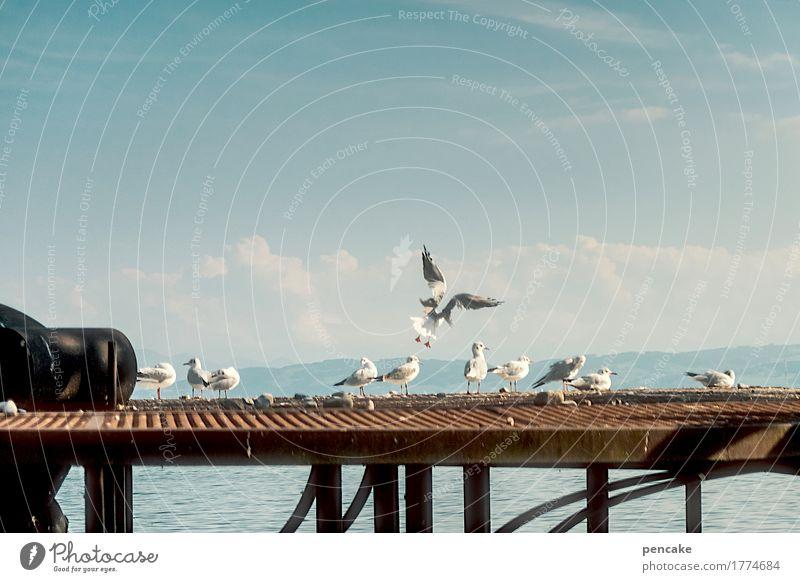 landeanflug Landschaft Wasser Himmel Schönes Wetter Seeufer Hafenstadt Hochsitz Dach Vogel Tiergruppe Fröhlichkeit Zufriedenheit Landen Möwenvögel fliegen