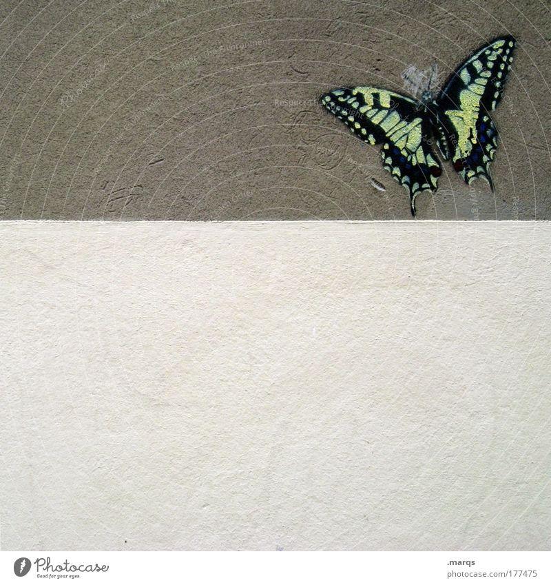Zerschmetterling Gedeckte Farben Außenaufnahme Textfreiraum unten Textfreiraum Mitte Lifestyle exotisch Tier Mauer Wand Schmetterling 1 Beton Graffiti fliegen