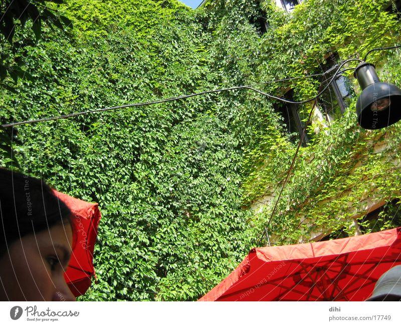Wilder Wein Romantik Hinterhof wuchern sattes grün beranktes Haus