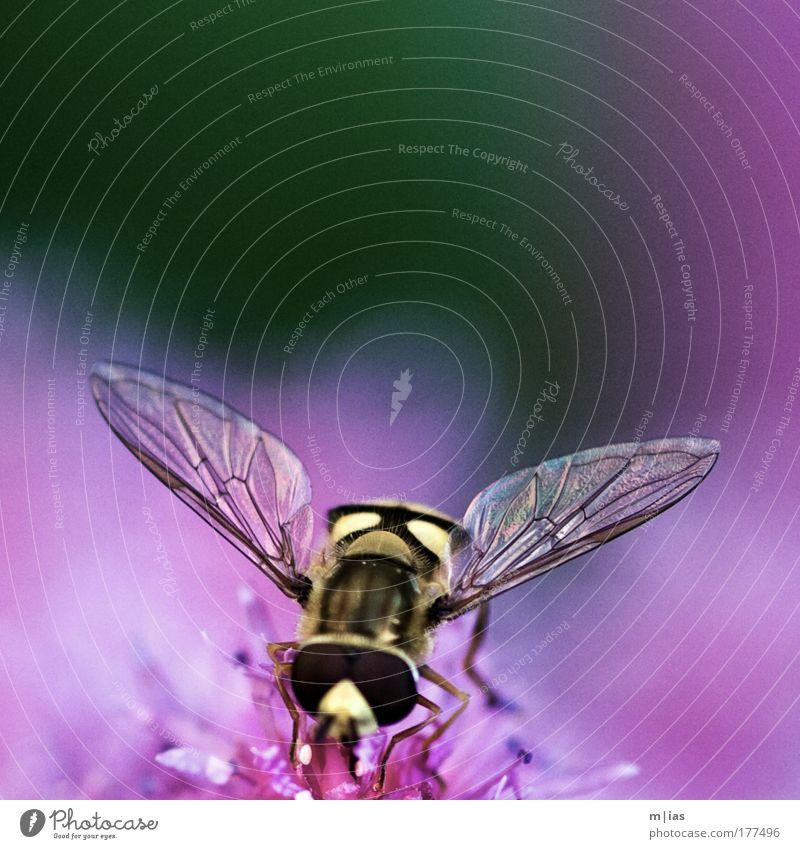 scharf summend zart rosa schön Sommer Tier Blüte Arbeit & Erwerbstätigkeit Angst fliegen Freizeit & Hobby glänzend Energie authentisch ästhetisch Sauberkeit