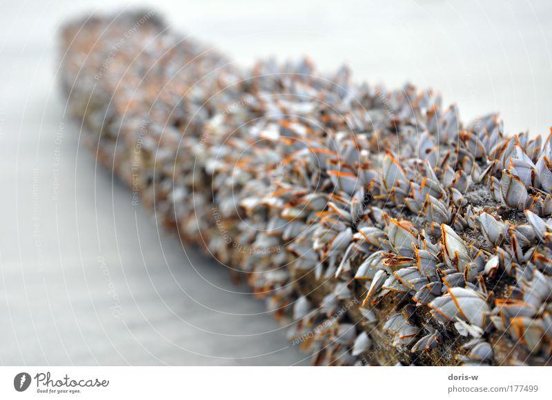 mussels Natur Meer Pflanze Sommer Strand Ferien & Urlaub & Reisen Tier gelb grau See Sand Landschaft braun Wellen Küste groß