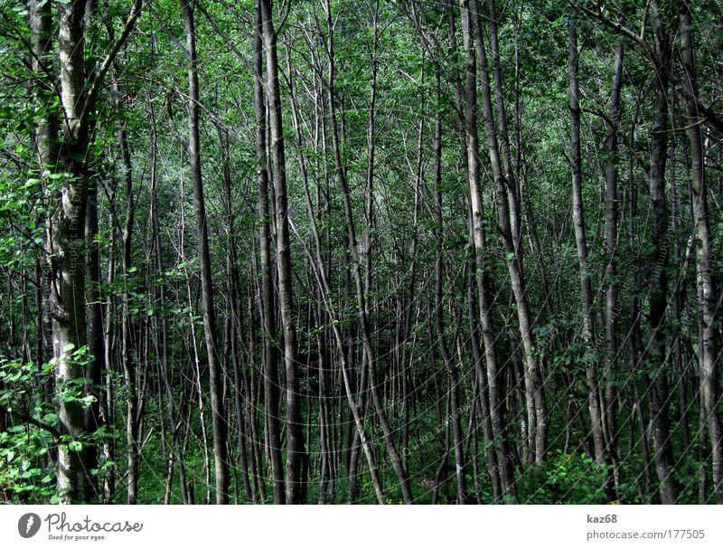 Elfenwelt Wald Baum Blatt grün Landschaft Natur Urwald Märchenwald Pflanze Geister u. Gespenster Hexe Ferien & Urlaub & Reisen Angst Umwelt Wildnis Holz