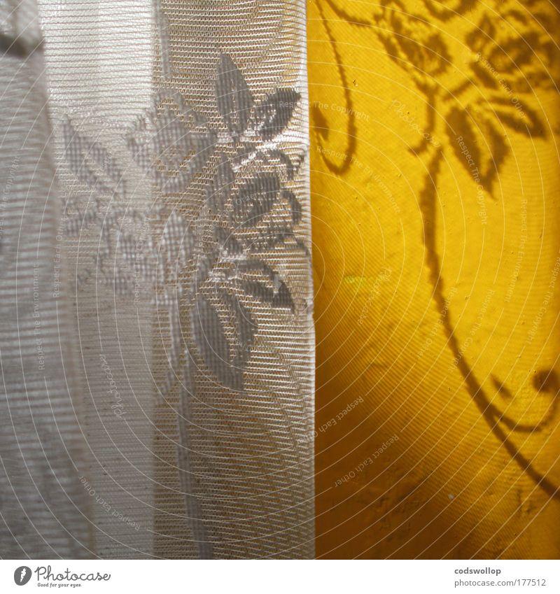 lichtfilter weiß Blume Sommer gelb Wand Fenster hell Küche Warmherzigkeit