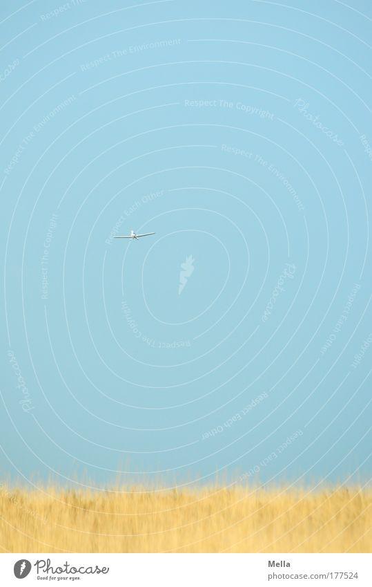 Nimm mich mit! blau Sommer Ferien & Urlaub & Reisen Ferne gelb Wiese Freiheit Landschaft Umwelt Gras Luft Feld Horizont Flugzeug hoch fliegen