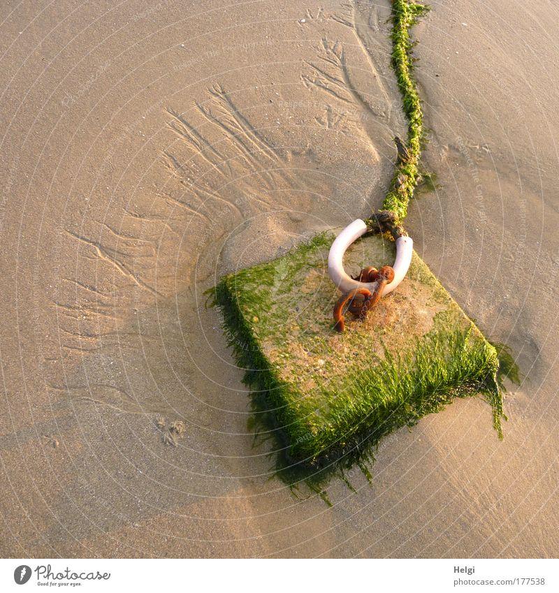 fest verankert... Natur weiß grün Pflanze Sommer Strand Stein Sand braun Kraft Metall Küste nass Sicherheit gefährlich liegen