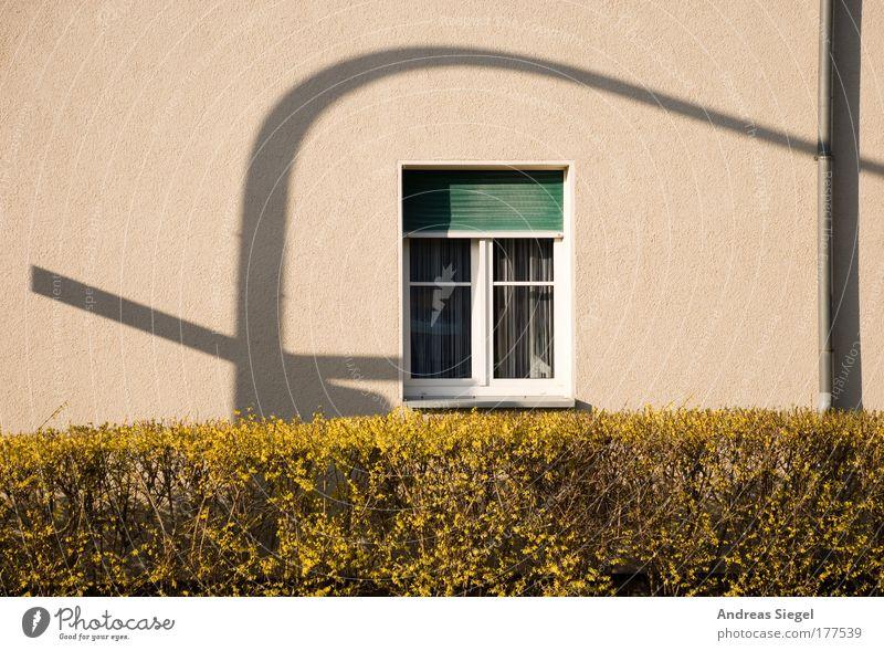 Schattenampel grün Pflanze Haus Fenster Wand Architektur grau Gebäude Mauer Linie Wohnung Fassade ästhetisch authentisch außergewöhnlich