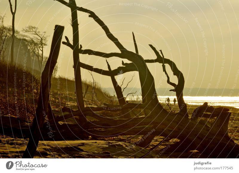 Weststrand Farbfoto Außenaufnahme Tag Abend Ferien & Urlaub & Reisen Tourismus Strand Meer Mensch 2 Umwelt Natur Landschaft Pflanze Baum Küste Ostsee dunkel