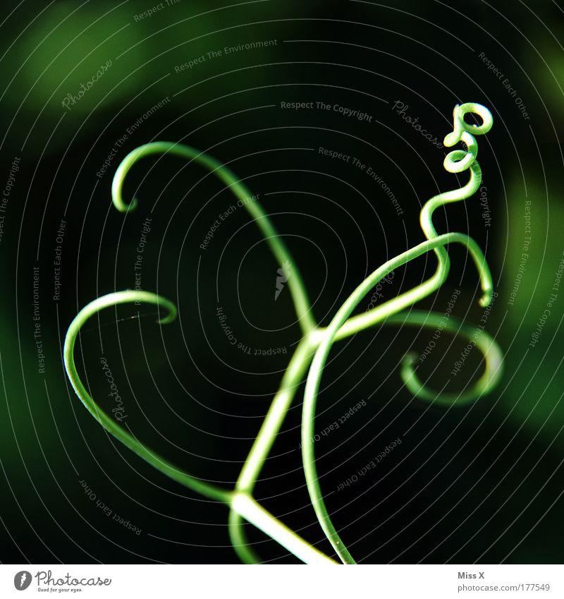 Kräusel Natur schön Blume Pflanze Sommer Blatt Wiese Blüte Park Kreis Wachstum Stauden Kurve Spirale wickeln Kräusel