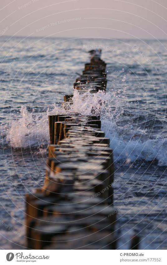 Nicht auf die Buhnen! Natur Wasser Strand Tier Küste Luft Wellen Vogel Wassertropfen Urelemente Ostsee Möwe Gischt Holzpfahl