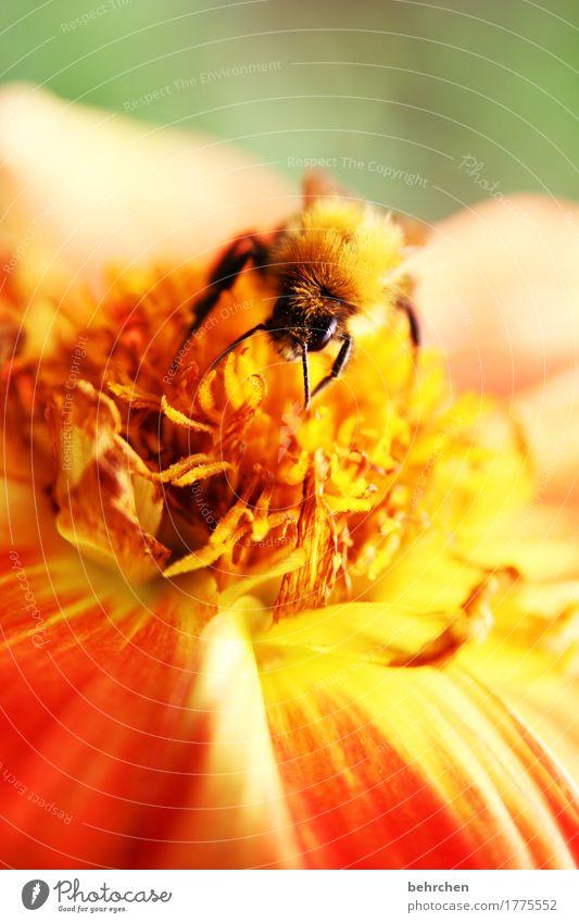 wintervorrat Natur Pflanze Sommer schön Blume Blatt Tier Blüte Wiese klein Garten fliegen orange Park Wildtier Flügel
