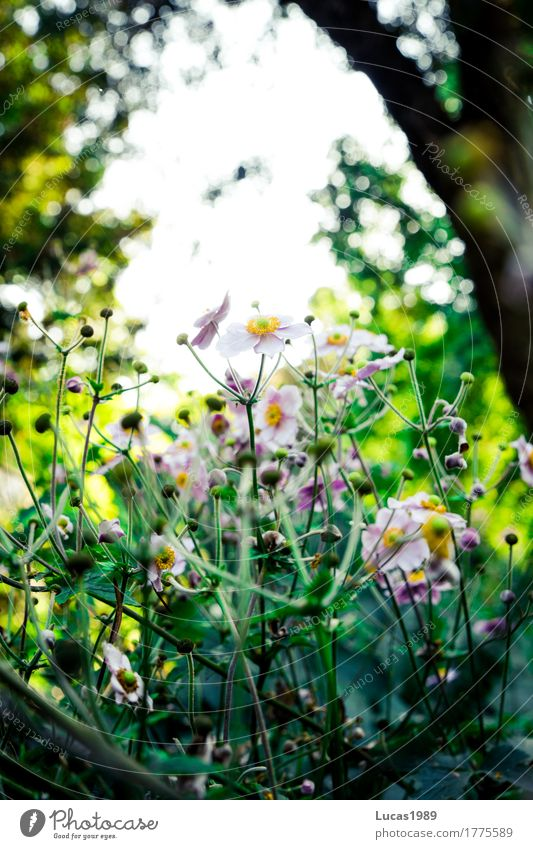 Blumenzauber im Park Umwelt Natur Landschaft Pflanze Frühling Sommer Baum Gras Sträucher Blatt Blüte Grünpflanze Wildpflanze Garten Wald außergewöhnlich