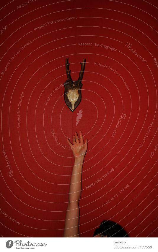 Griff nach dem Gehörn Mensch Frau Hand schön Freude Tier Erwachsene Haare & Frisuren Arme hoch Fröhlichkeit verrückt authentisch Coolness einfach Horn
