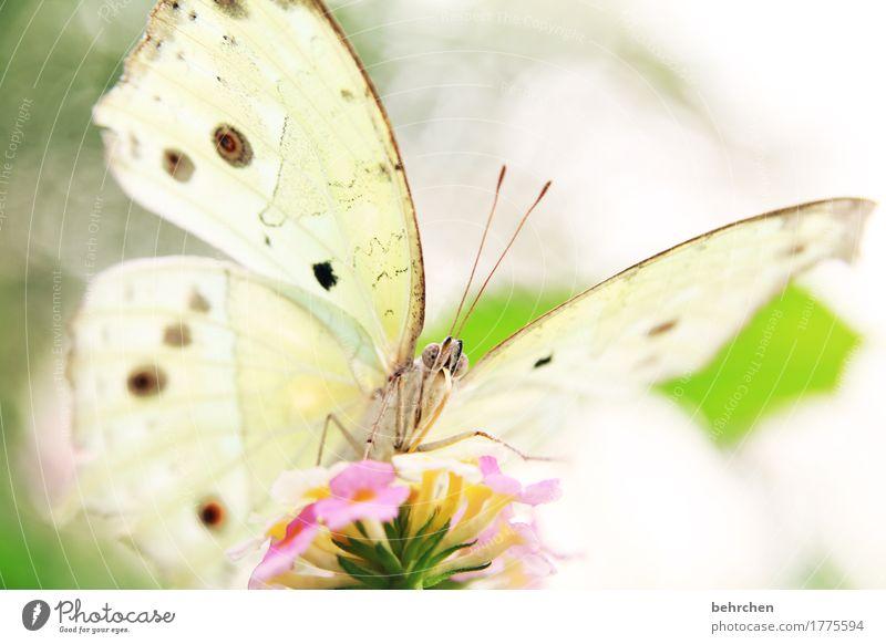 wer die nachtigall stört... Natur Pflanze Tier Sommer Baum Blatt Blüte Garten Park Wiese Wildtier Schmetterling Tiergesicht Flügel 1 beobachten Blühend Duft