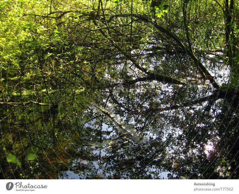 ins Wasser gefallen Umwelt Natur Landschaft Pflanze Himmel Klima Schönes Wetter Baum Gras Sträucher Wildpflanze Wald Teich Bach kaputt nass blau braun grün