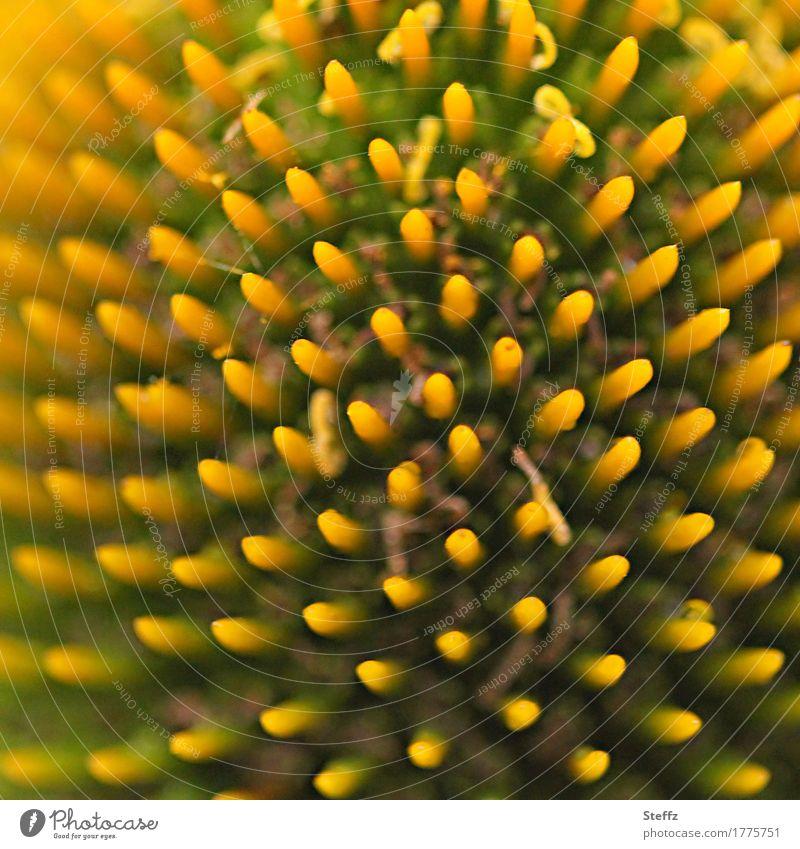 Symmetrie der Natur Pflanze Sommer Blume Blüte Blütenstempel Gartenblume Stempel Sonnenhut Heilpflanzen Sommerblumen Park Blühend nah natürlich orange komplex