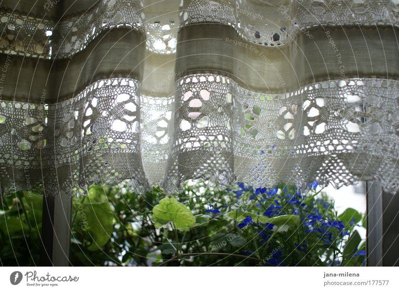 sommerausblick Natur alt weiß Blume blau Pflanze Sommer Blatt Fenster Blüte Frühling Garten Aussicht Sauberkeit Dorf verstecken