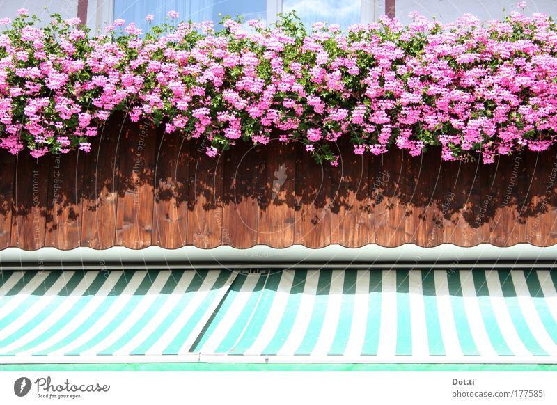 Balkonette Pflanze Haus Wand Fenster Blüte Mauer Gebäude rosa Fassade Streifen Dorf Balkon Bayern gestreift üppig (Wuchs) prächtig