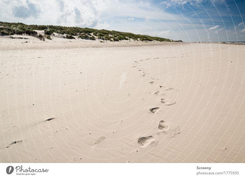 Strandläufer Himmel Natur Ferien & Urlaub & Reisen Sommer Sonne Landschaft Meer Wolken Ferne Wege & Pfade Gras Küste Freiheit Sand Tourismus