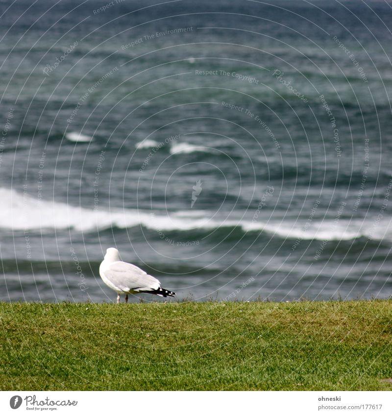 Wo sind denn die anderen? Natur Wasser weiß Meer grün Ferien & Urlaub & Reisen ruhig Einsamkeit Tier Ferne Wiese Freiheit Zufriedenheit Vogel Wellen Küste