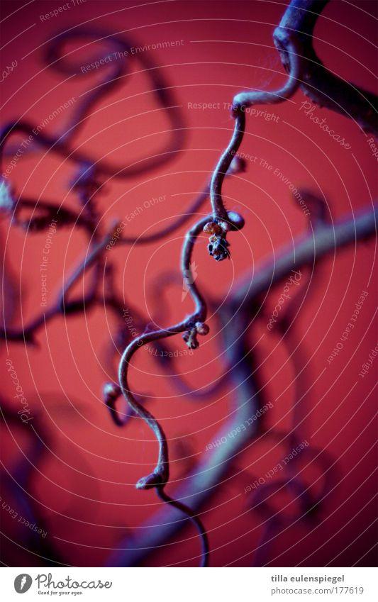 hauptsache bunt Natur Farbe Holz Netzwerk Ast Vergänglichkeit wild Unendlichkeit natürlich vertrocknet Zweige u. Äste verdreht Schnörkel
