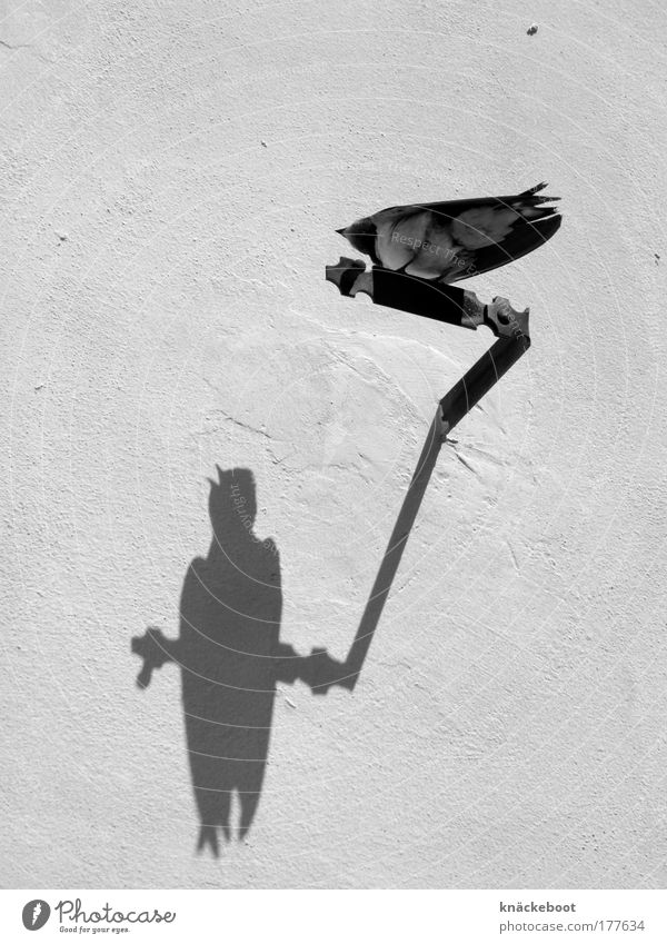 vögel Sommer Tier Wand Mauer Vogel frei Schwarzweißfoto