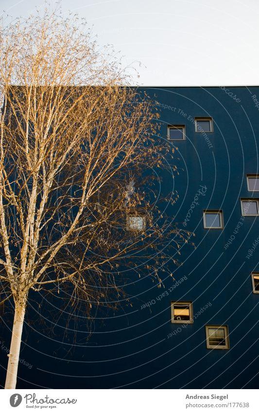 weiß vor blau Himmel blau weiß Baum Haus Fenster Wand Architektur Gebäude Mauer Wohnung Fassade Design modern natürlich