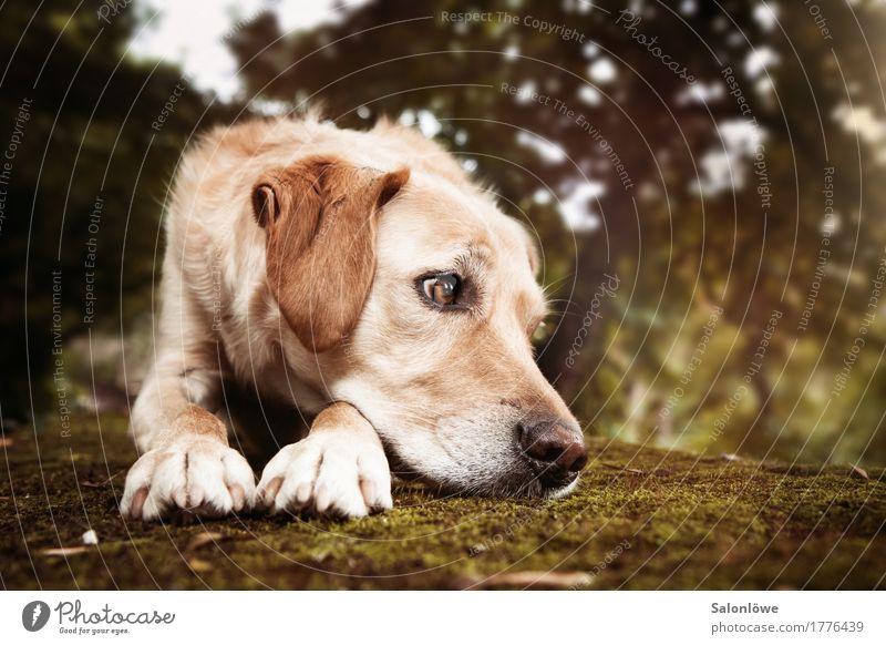 UnEntspannt Hund Tier blond Sehnsucht Haustier Momentaufnahme Langeweile Jagdhund Hundeblick unaufmerksam