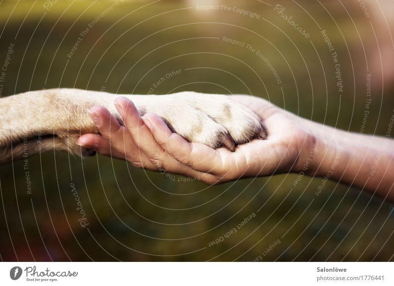Friends Mensch Hund Natur Hand Tier ruhig Umwelt Gefühle Liebe Glück Zusammensein Freundschaft Zufriedenheit Kraft Kommunizieren Zeichen