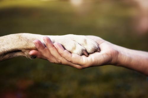 Friends ruhig Mensch Freundschaft Hand Umwelt Natur Tier Hund Zeichen festhalten Kommunizieren Umarmen Glück Unendlichkeit Gefühle Kraft Vertrauen Sympathie