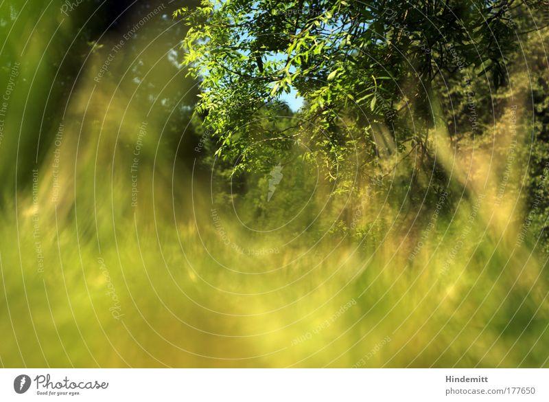 Auf Gras Farbfoto Außenaufnahme Experiment Menschenleer Textfreiraum unten Tag Unschärfe Schwache Tiefenschärfe Froschperspektive Umwelt Natur Pflanze Himmel