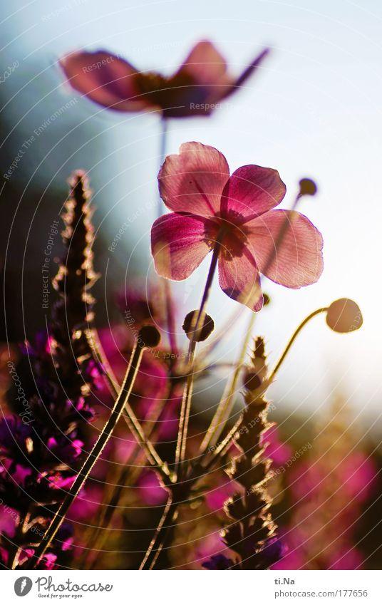 Spätsommer im Garten Farbfoto mehrfarbig Außenaufnahme Menschenleer Abend Licht Schatten Kontrast Silhouette Reflexion & Spiegelung Froschperspektive Umwelt
