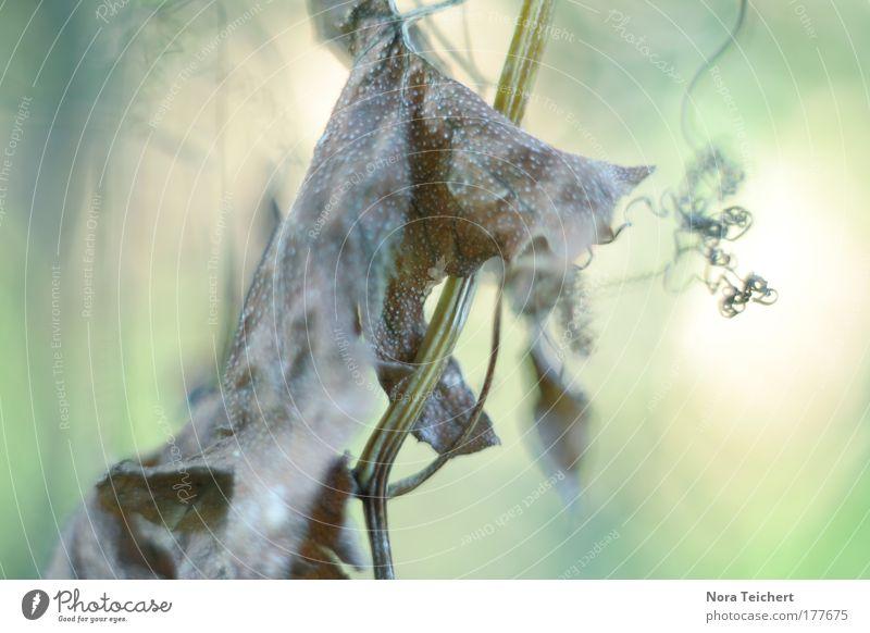 Dream part I Natur schön Baum Pflanze Sommer Tier Einsamkeit ruhig Umwelt träumen Stimmung Zeit Feld außergewöhnlich Zukunft Vergänglichkeit