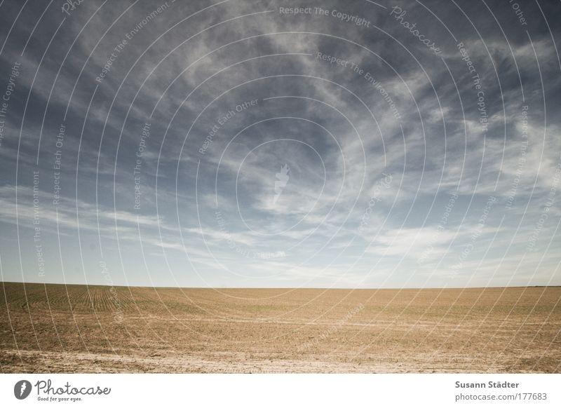 What The World Needs Now Sonne Pflanze Sommer Ferne Wiese Freiheit Sand Landschaft Luft Feld Umwelt Horizont Erde Ausflug Hügel Dürre