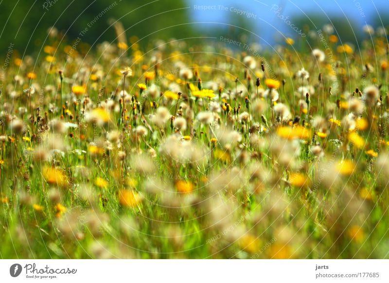 Spätsommer Natur Sommer ruhig Herbst Gras Landschaft Zufriedenheit Feld Umwelt Klima natürlich Schönes Wetter