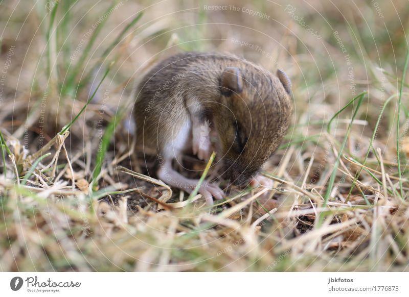 Katzengeschenk [2] Natur Einsamkeit Tier Tierjunges Umwelt Leben Gefühle Wiese Garten Lebensmittel Park Ernährung Wildtier Lebensfreude niedlich Rasen