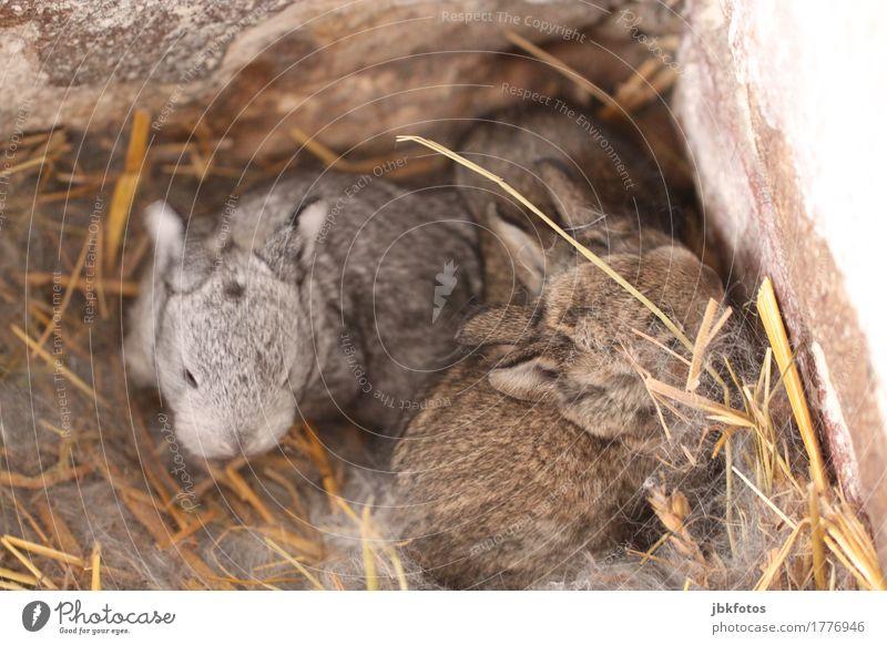 Kuscheln, bitte! Lebensmittel Ernährung Umwelt Natur Tier Tiergesicht Schuppen Hase & Kaninchen Tierjunges kuschlig Wärme Außenaufnahme Detailaufnahme