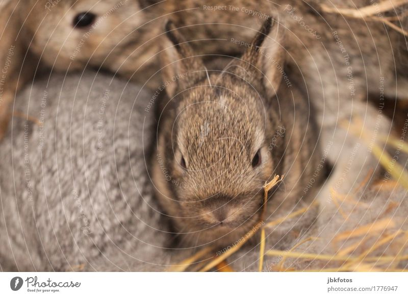 Kaninchen hatten wilden Herrenbesuch... Lebensmittel Ernährung Umwelt Natur Tier Haustier Nutztier Wildtier Hase & Kaninchen 3 Tierjunges außergewöhnlich