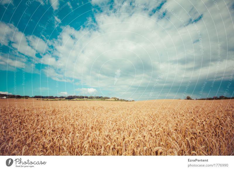 Himmel und Erd harmonisch Erholung ruhig Ferien & Urlaub & Reisen Tourismus Ausflug Abenteuer Umwelt Natur Landschaft Pflanze Wolken Sommer Klima Wetter