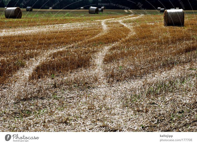 tortengrafiken Natur Tier Umwelt Landschaft Wege & Pfade Feld groß Erfolg Klima Wachstum Zukunft Spuren Getreide Ernte Wirtschaft