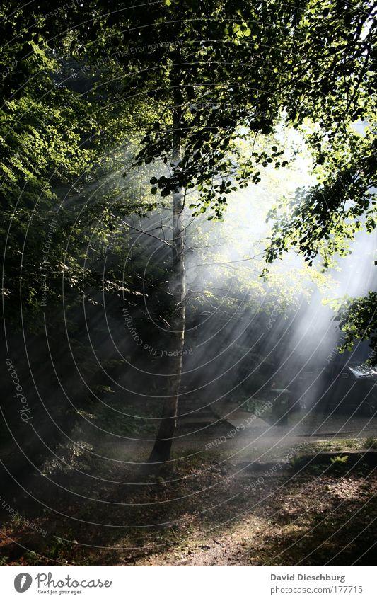 Der Tag bricht an... Natur grün Baum Pflanze Wald dunkel Luft hell Nebel leuchten Sonnenstrahlen Licht Lichterscheinung Sonnenlicht Lichtstrahl Lichteinfall