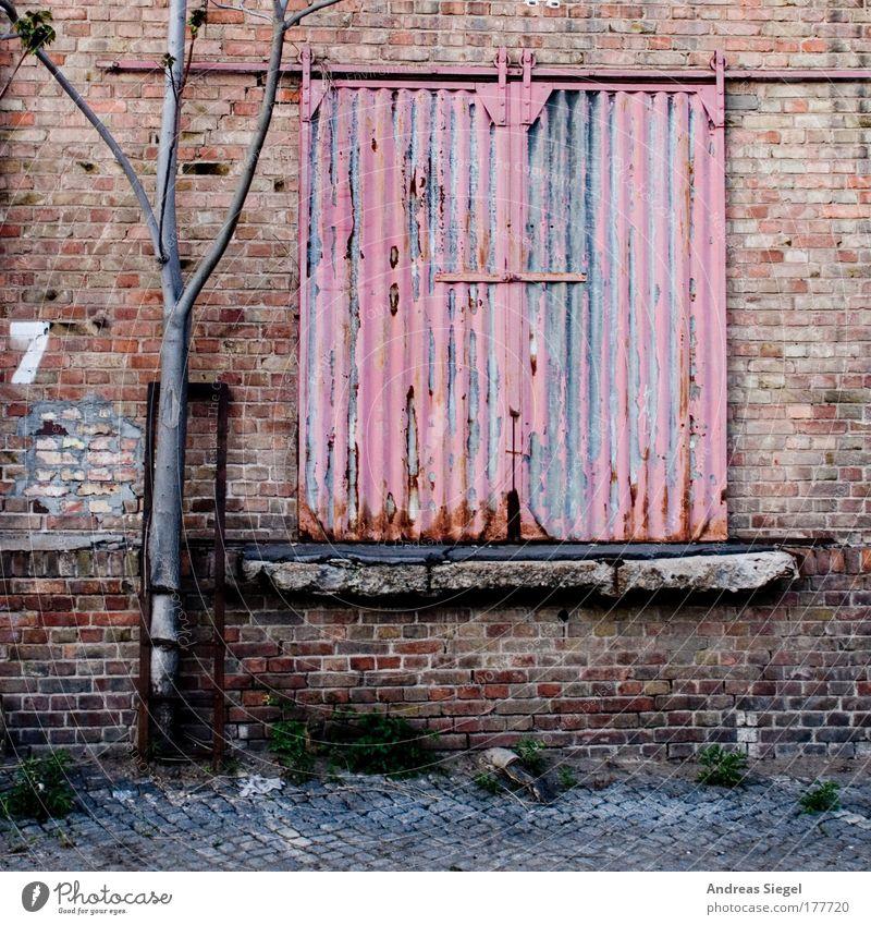 7 alt Baum rot Einsamkeit Wand Architektur grau Gebäude Mauer Traurigkeit Tür rosa geschlossen Fassade trist