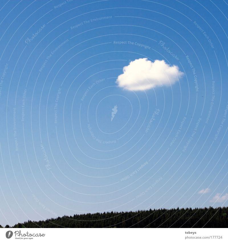 Vorbote Himmel Ferien & Urlaub & Reisen Sommer Einsamkeit Wolken ruhig Erholung Wald Bewegung Freiheit Glück Stil Zufriedenheit frei Ausflug ästhetisch