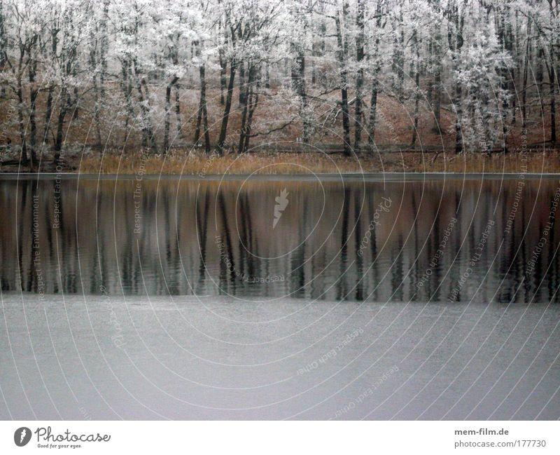 schlachtensee Raureif Winter kalt zugefrohren See ufer Baum frieren bodenfrost überfrierende nässe Landschaft Jahreszeiten