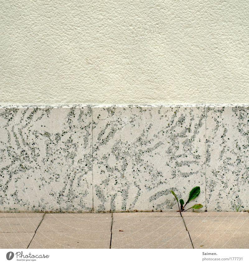 Überlebenskünstler Farbfoto Außenaufnahme Textfreiraum oben Tag Pflanze Blatt Grünpflanze Wildpflanze Mauer Wand Wachstum außergewöhnlich Erfolg frisch hell