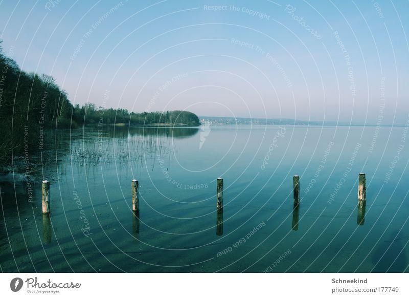 fünf Freunde Natur Wasser schön Himmel Baum blau Pflanze Ferien & Urlaub & Reisen ruhig Ferne Erholung Gras Freiheit Glück träumen See