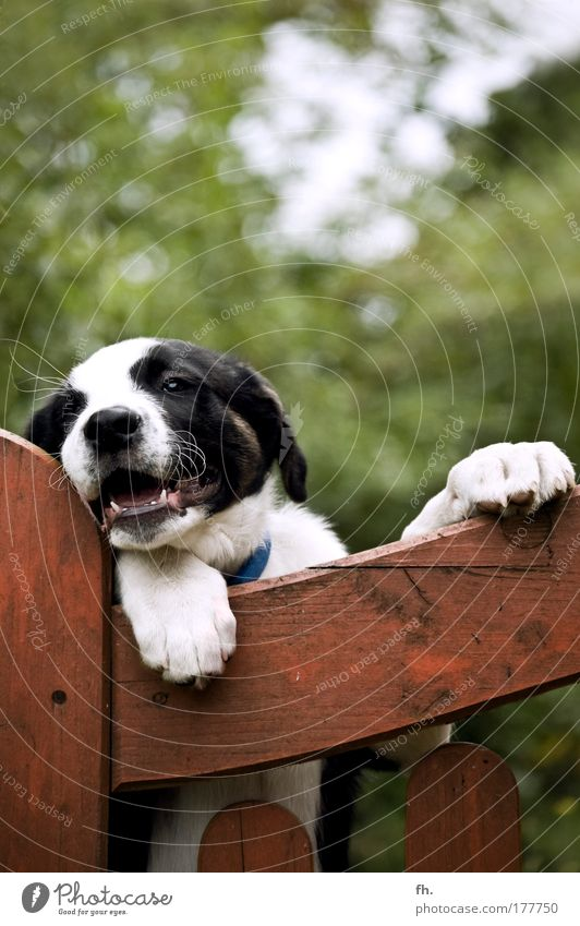Tierische Zuneigung Natur weiß Baum grün schwarz springen Bewegung Holz Hund braun warten Fröhlichkeit stehen Tiergesicht beobachten
