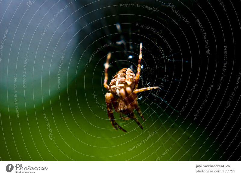 grün Tier Angst durchsichtig Spinne